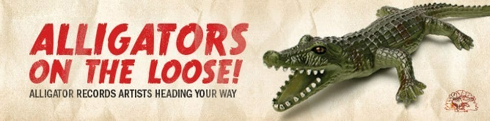 <a class=&quot;amazingslider-posttitle-link&quot; href=&quot;http://www.makingascene.org/alligator-tour/&quot;>ALLIGATOR RECORDS ARTISTS ON TOUR this Summer!</a>